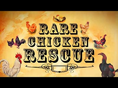 Really funny movie to watch high Rare Chicken Rescue by [640x640]