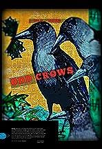 Odd Crows