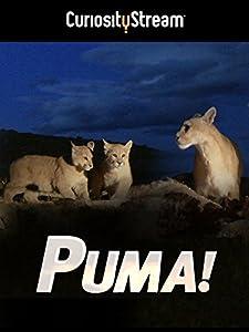 Download gratuito di serie di film El puma by René Cardona [480x360] [QuadHD] Mexico
