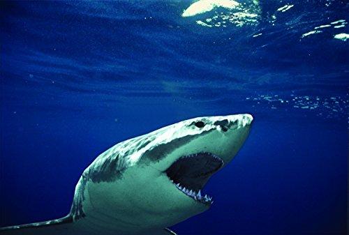 Anatomy of a Shark Bite (2003)