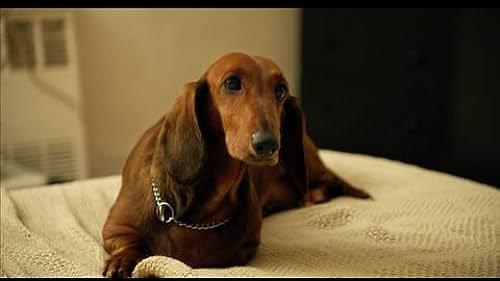 Trailer for Wiener-Dog