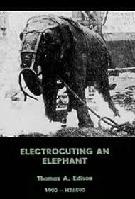 Topsy in Electrocuting an Elephant (1903)