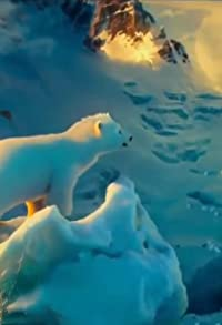 Primary photo for The Polar Bears