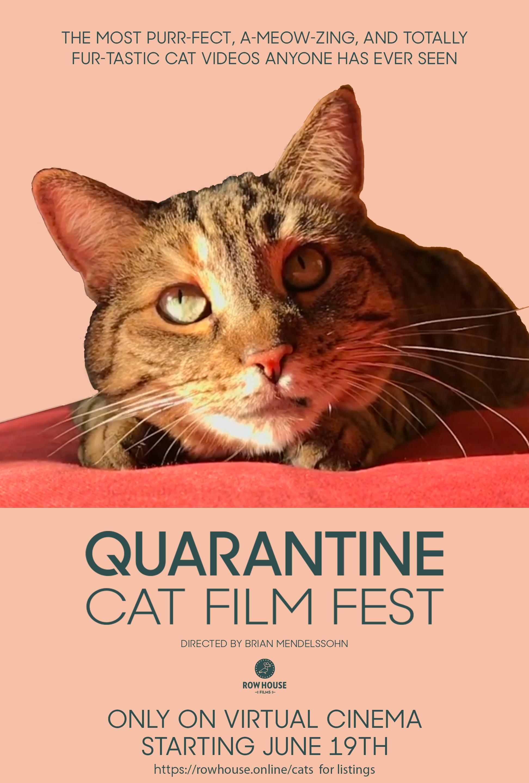 Quarantine Cat Film Fest 2020 Imdb