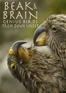 Beak & Brain - Genius Birds from Down Under