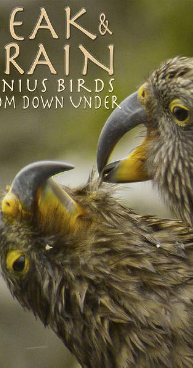 Subtitle of Beak & Brain - Genius Birds from Down Under