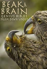 Beak & Brain - Genius Birds from Down Under (2013) Superhirn im Federkleid - Kluge Vögel im Duell 720p
