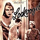Lockvogel (1934)