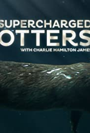 Supercharged Otters Poster