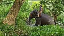 Andy e gli elefanti asiatici
