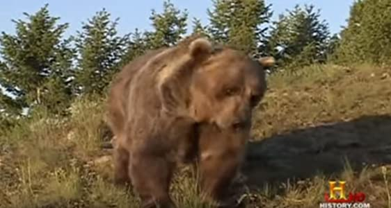 Movie clips watch Giant Bear Attack by none [QuadHD]