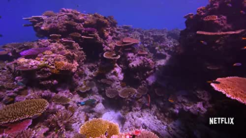 Coral reefs around the world are vanishing at an unprecedented rate. A team of divers, photographers and scientists set out on a thrilling ocean adventure to discover why and to reveal the underwater mystery to the world.