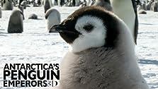 Antarctica's Penguin Emperors 3D (2013)