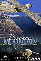 Pyrenees Mountain: Bearded Vulture - The Rare Bone Breaking Bird