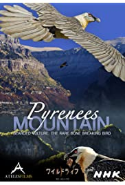 Pyrenees Mountain, Lammergeier, the bone Crashers, Soar up High above the Mountains