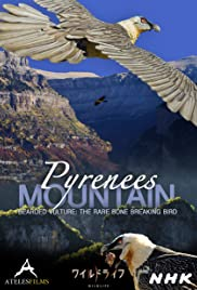 Pyrenees Mountain: Bearded Vulture - The Rare Bone Breaking Bird Poster