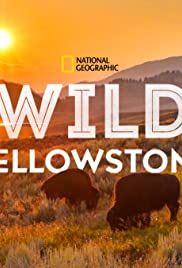 Wild Yellowstone Poster