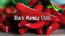 Black Mamba Chilli: Tastes Good, Looks Good, Does Good! (2017)