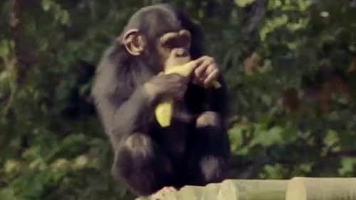 Meet The Chimps (German Trailer 1)
