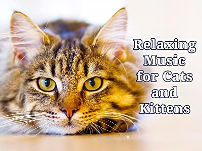 Netflix tv movie downloads Relaxing Music for Cats and Kittens