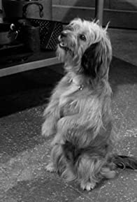 Primary photo for My Dog the Actor