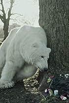 The Homeless Polar Bear