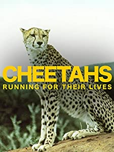 Cheetahs: Running for Their Lives