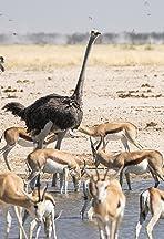 Namibia Diaries