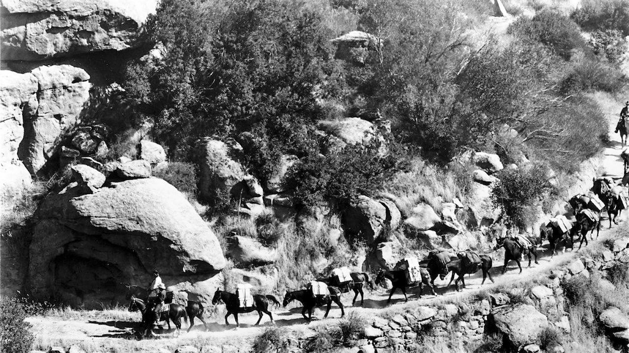 Pack Train (1953)