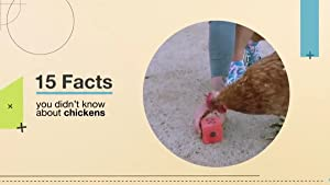 15 Facts You Didn't Know About Chickens