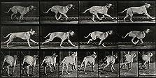 Dog Running (1887)