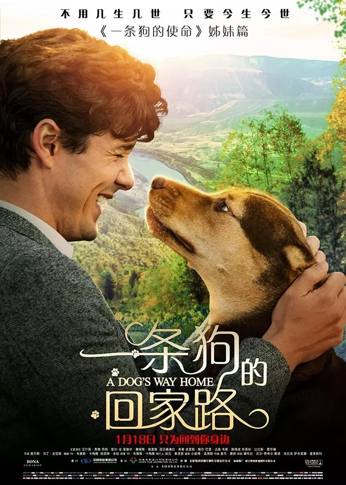 A Dog's Way Home (2019) 720p Bluray- ORG [Hindi + Eng +Tamil + Telugu ] ESubs