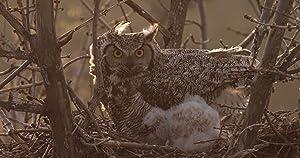The Secret Life of Owls