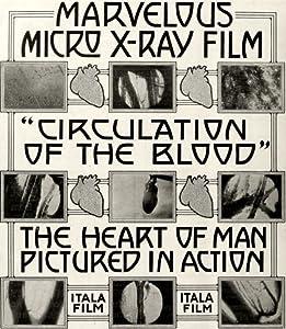 Watch adult movies no downloads La circolazione del sangue Italy [BluRay]