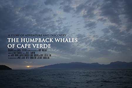 The Humpback Whales of Cape Verde