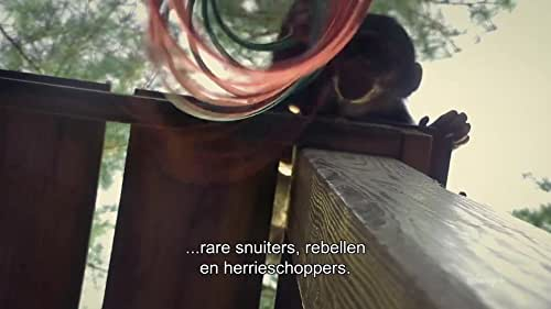 Meet The Chimps (Dutch Trailer 1 Subtitled)