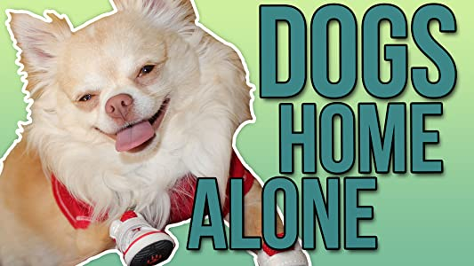 MP4 movies ipod download What Gizmo the Chihuahua does when I'm not home! [mp4]