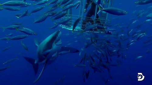 Shark Week: Legend Of Deep Blue