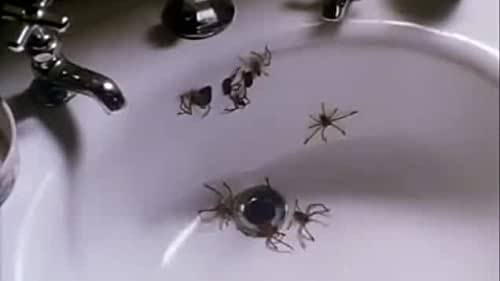 A species of South American killer spider hitches a lift to the U.S. in a coffin and starts to breed and kill.
