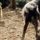 Dimitri and Benjean in Benji the Hunted (1987)