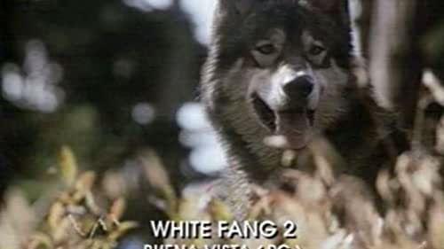 trailer for White Fang 2:Myth Of the White Wolf