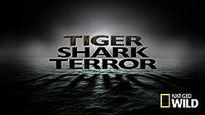 Tiger Shark Terror