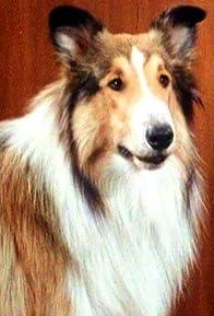 Primary photo for Lassie