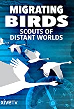 Zugvögel - Kundschafter in fernen Welten