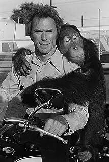 Manis the Orangutan Picture