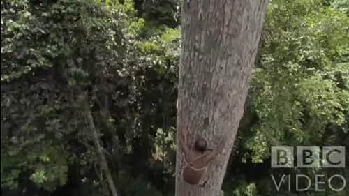 Human Planet: Honey Gatherers