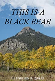 This is a Black Bear