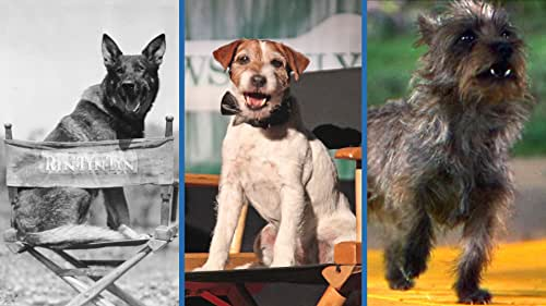 Uggie, Toto, & Award-Winning Movie Dogs