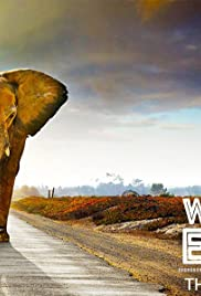 Walking With Elephants Poster