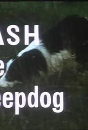 Flash the Sheepdog Poster